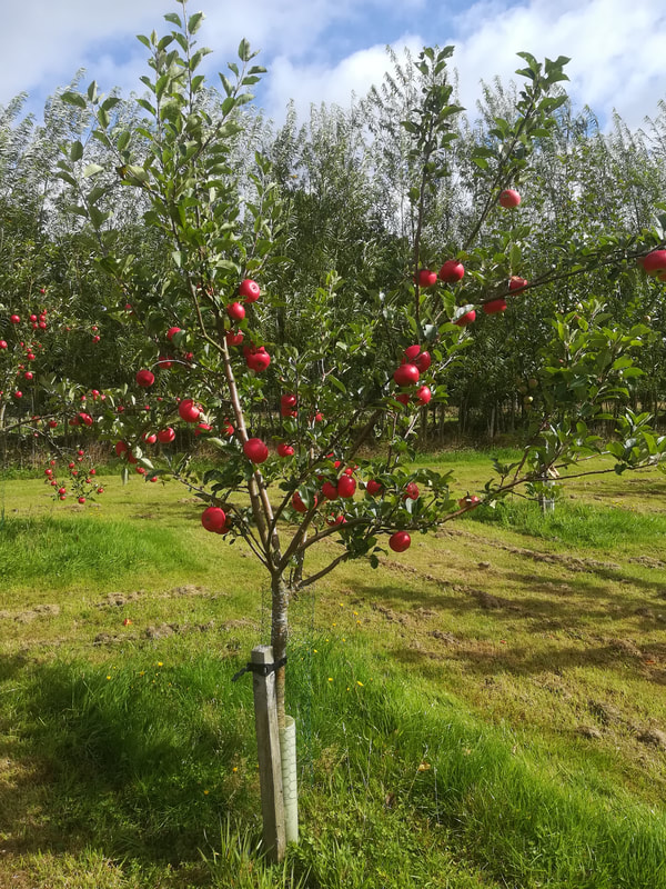 Visitors to Appletree Holiday Cottage can request orchard guided tour