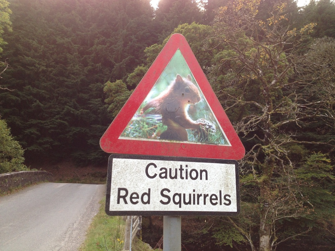Red Squirrel sign at Lochgoilhead on an excursion from Appletree Cottage, Croftamie