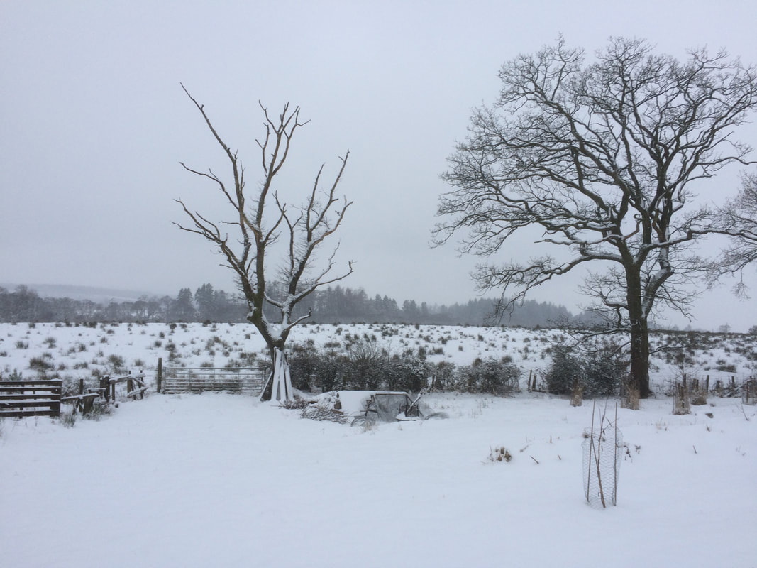 Snowy view from Appletree Self Catering Cottage Loch Lomond