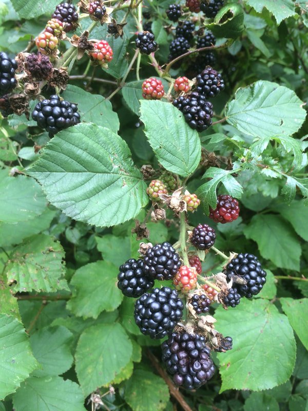 blackberries by Appletree Luxury Self Catering Lodge