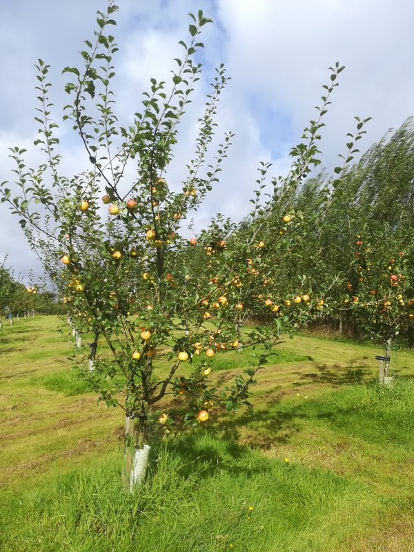 Apple Orchard next Luxury Holiday Rental Loch Lomond